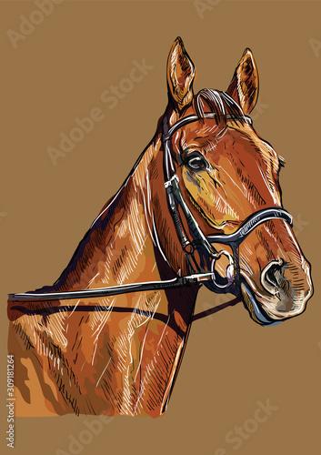 Fényképezés Hand drawing horse portrait vector 22