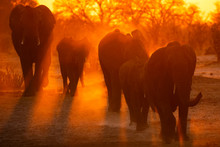 Dust Clouds Elephants