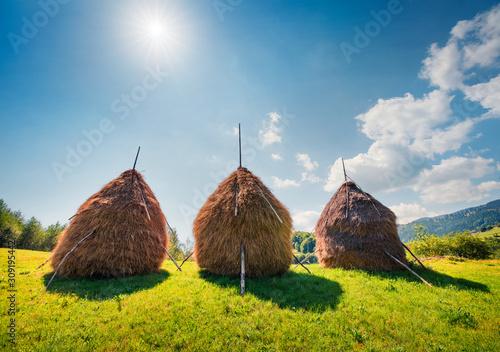 Three holes of hay on a green lawn Tapéta, Fotótapéta