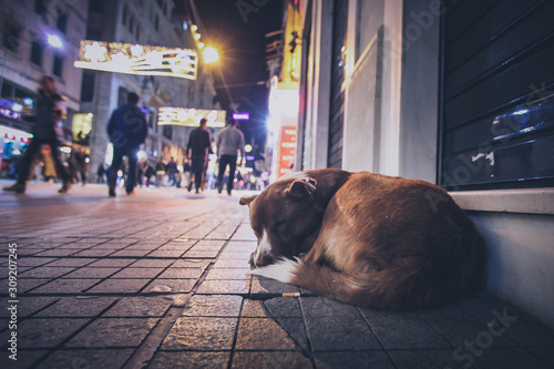 A stray abandoned dog during the night on the busy city street in Istanbul Canvas Print