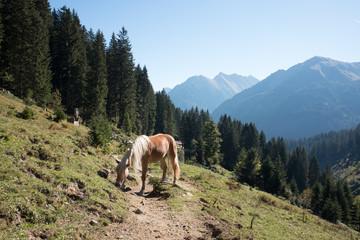 Pferd am Berg