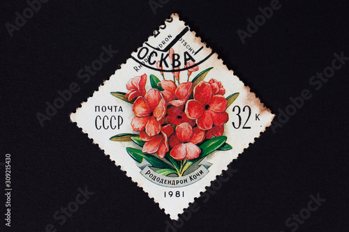 USSR - CIRCA 1981: stamp printed in USSR shows red flowers. Tableau sur Toile