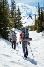 Climbers  Approach Mount Raini...