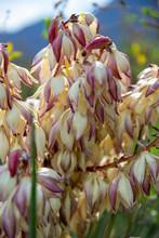 Enchanting Floral Clusters