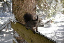 Squirrel On Wooden Fence In Wi...