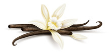 Vanilla Flower With Dried Vani...