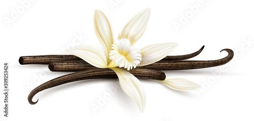 Cuadros en Lienzo Vanilla flower with dried vanilla sticks and petal