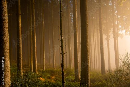 Obraz na plátně  Märchenwald