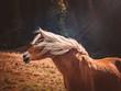 Pferd in den Bergen 03
