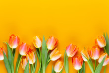 Yellow Pastels Color Tulips On...