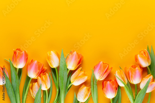 Yellow pastels color tulips on yellow background. #309264852