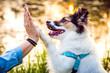 Przybij piątkę - pies podaje łapę opiekunowi
