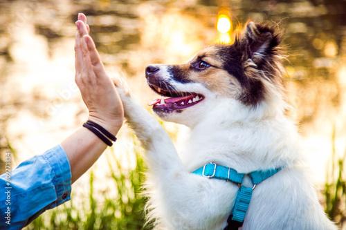 Photo Przybij piątkę - pies podaje łapę opiekunowi