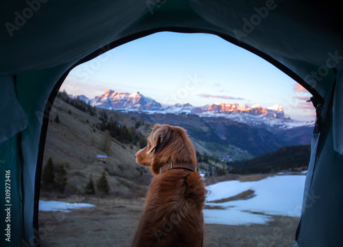 Fototapeta Traveling with a dog, camping