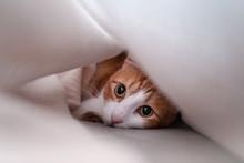 Gato Escondido Bajo Una Manta ...