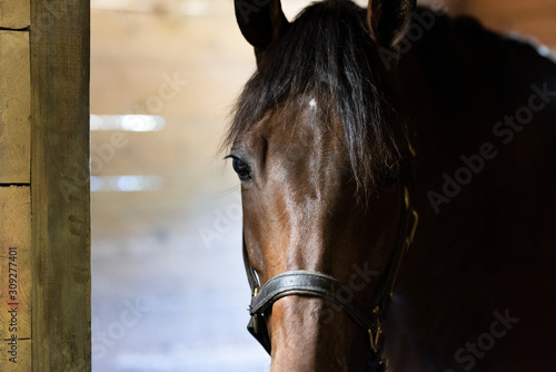 Horse Farm and Stables