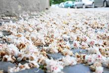 Blüten Auf Bürgersteig