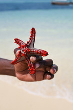 Red Starfish In Hand