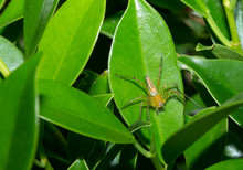Macro Insect On The Leaves Wit...