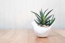 Dark Green Plant In White Pot ...