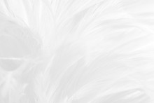 Beautiful White Feather Wool P...