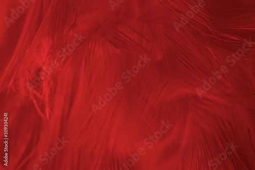 Beautiful dark red maroon feather pattern  texture background - 309304241