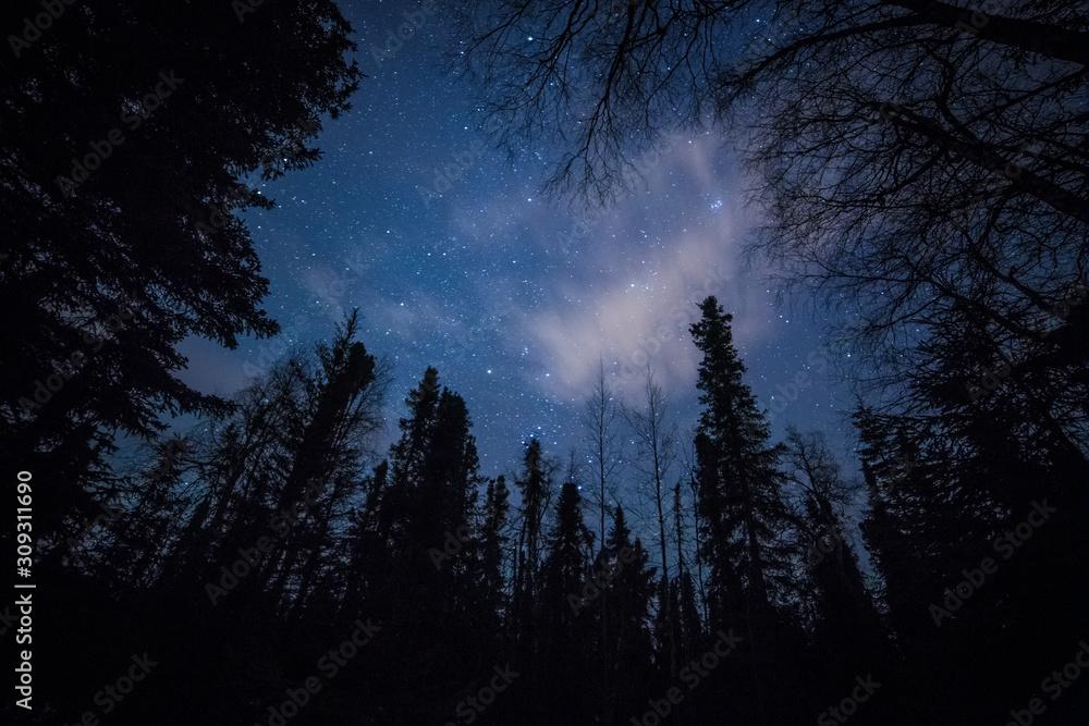 Fototapeta Forest against the night sky