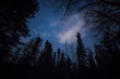 Leinwanddruck Bild - Forest against the night sky