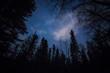 Leinwandbild Motiv Forest against the night sky