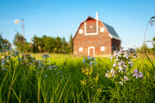 A Red Barn On Green Grass In Summer