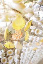 Seashells Mobiles Curtain With Beach Background, Selective Focus On Orange Shell
