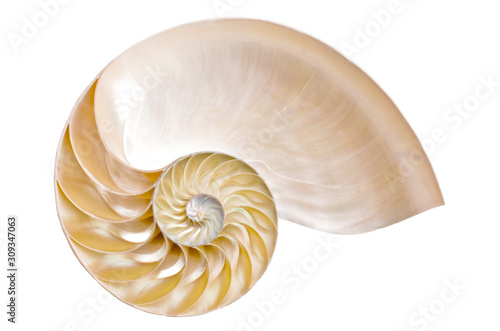 Photo Half ammonite on a white background illustrating the Fibonacci sequence