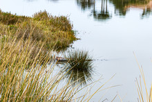 Wild Grasses And Shrubs Reflected In Water At Bird Sanctuary