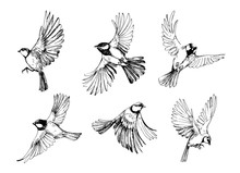 Set Of Flying Birds. Titmouse Sketch. Outrline With Transparent Background. Hand Drawn Illustration Converted To Vector