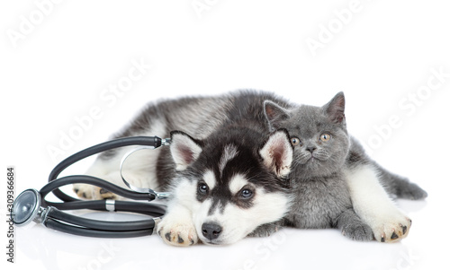 Siberian Husky puppy with stethoscope on his neck huggs british kitten. isola...
