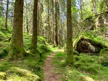 Hiking Path In The Moss Forest...
