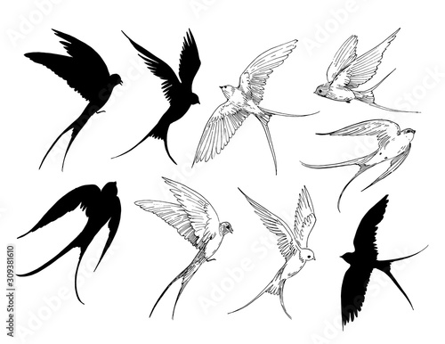 Set of a flying swallows. Hand drawn illustration converted to vector. Outline with transparent background Fototapete