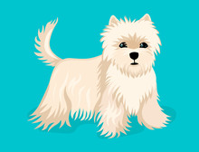Little Puppy, Dog Breed Shi Tz...
