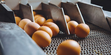 Egg Factory Plant Agriculture ...