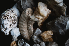 Composition Of Fossilized Anim...