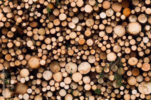 Carta da parati Pile of pine tree logs