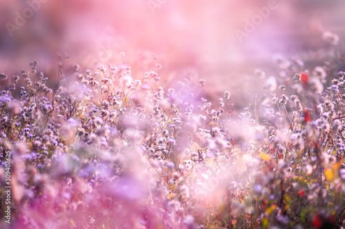 Fototapeta beautiful grass flower in soft pink romance background with light leaks at sunrise   obraz