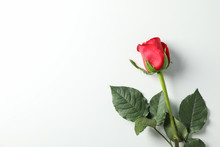 Beautiful Red Rose With Green Leaves On White Background, Space For Text