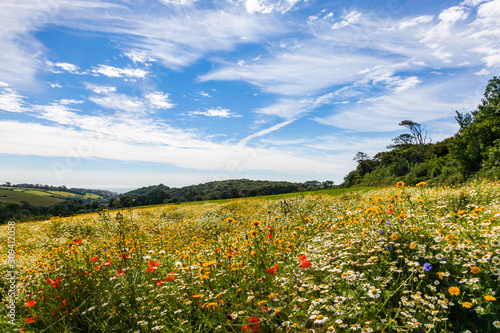 field of  wild flowers and blue sky - 309412058
