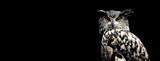 Fototapeta Zwierzęta - Eurasian eagle owl with a black background