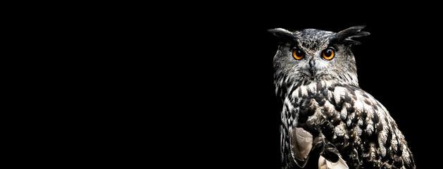 Eurasian eagle owl with a black background