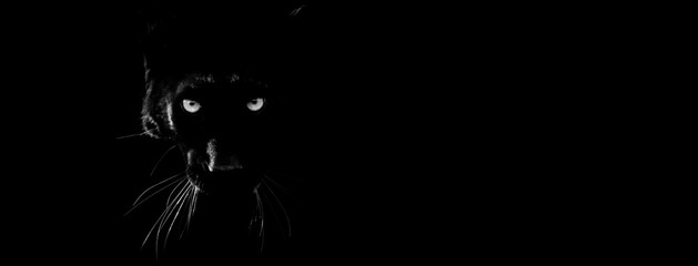 FototapetaBlack panther with a black background