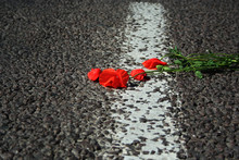 The Flower Of Red Poppy Lies O...