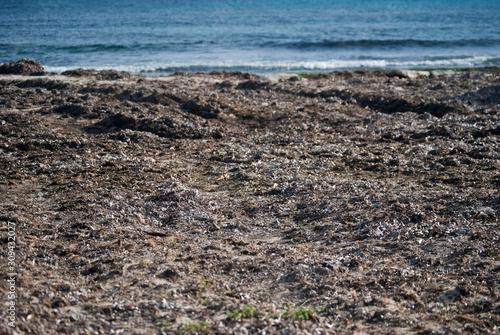 Stampa su Tela Playa de posidonia oceánica que invita a la calma