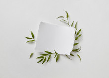 A White Sheet Of Paper Decorated With Fresh Green Leaves And Bra